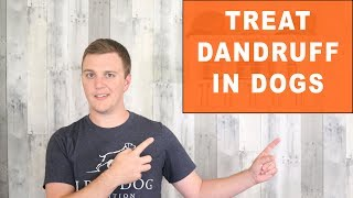 How To Treat Dandruff In Dogs - The Best Treatment For Dog Dandruff