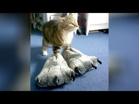 FUNNY VIDEOS that will make you OBSESSED WITH CATS - The FUNNIEST CAT compilation