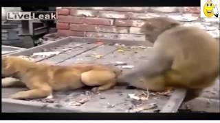 Những pha đánh nhau của động vật cực hài