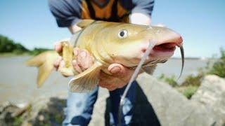 Catfishing in muddy water!