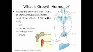 Growth Hormone Replacement: Not Just for Kids?