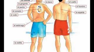 Dolor De Cabeza   Barbara MacArthur   Learn Spanish Body Parts