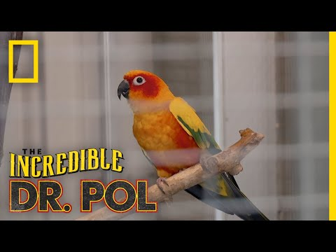 Parrot Manicure Day | The Incredible Dr. Pol
