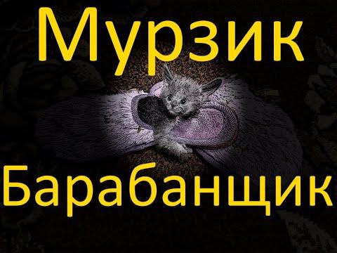 Мурзик барабанщик. 18/10/2020