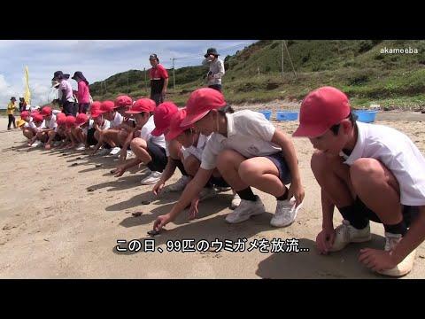 種子島の学校活動:岩岡小学校星原小学校長浜海岸でウミガメ放流体験2019年