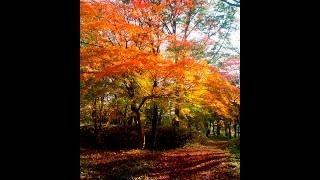 「小倉山森林公園」紅葉隠れスポットinNikko栃木県日光市