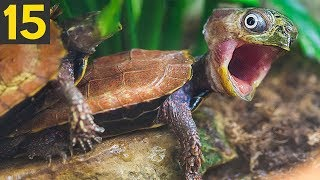 15 Unexpectedly Funny Sounding Animals