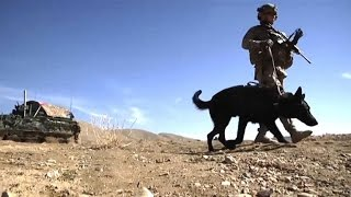 A Dog's Nose: The Best Way to Find IEDs?