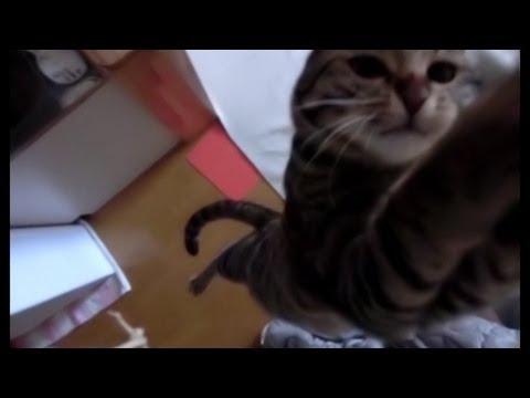חתול בקפיצות מדהימות!