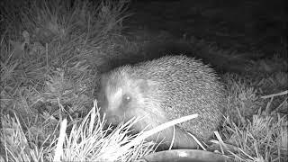 Wildlife Trail Camera - 17.4.2019