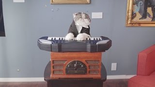Classical Choir Cats - Aaron's Animals - Video Youtube