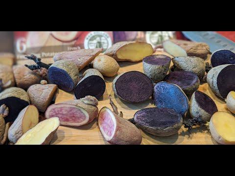 , title : 'How to grow and cut Seed Potatoes | Grow Potato's at Home| Home grown POTATO