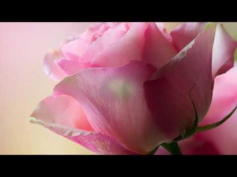 Летние  цветы  Красивая композиция, прекрасные краски лета