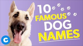 10 Famous Dog Names | Chewy