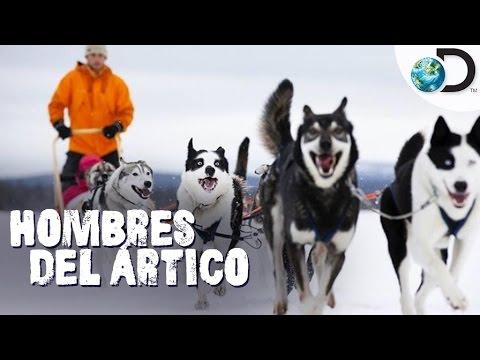 ¡La mayor competencia de trineos con perros! | Hombres del Ártico l Discovery Latinoamérica
