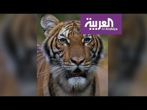 العرب اليوم - شاهد: أول حالة إصابة لحيوان بفيروس كورونا في الولايات المتحدة الأميركية