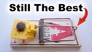 Best Mouse Trap – Best Bait