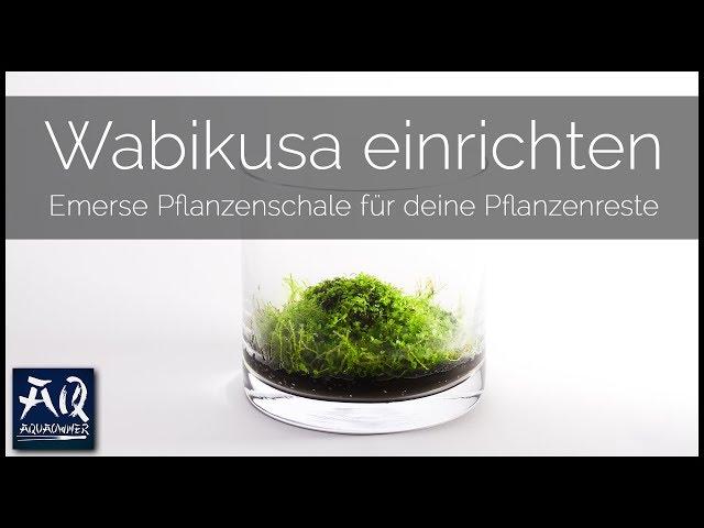 WABIKUSA EINRICHTEN | Schritt für Schritt zur eigenen Pflanzenschale | AquaOwner