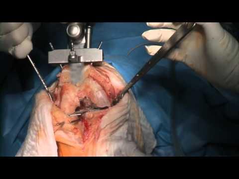 Die vaskulöse Chirurgie und angiologija dass dieser solches