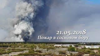 Пожар в сосновом бору. Семей, 21 мая. 2018
