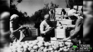 Каким был алматинский апорт 65 лет назад