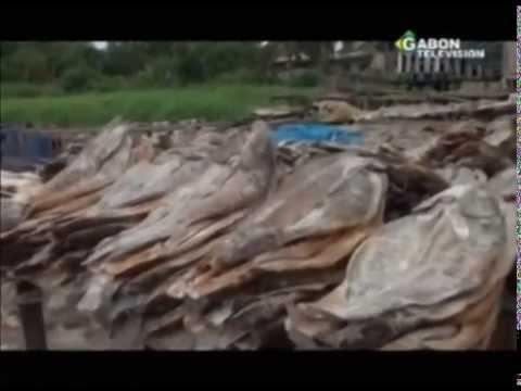 Les entozoaires du poisson de mer dangereux pour la personne