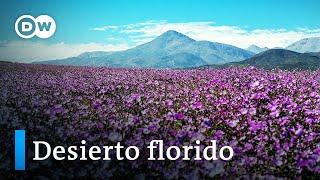 Atacama, un laboratorio natural para entender el cambio climático