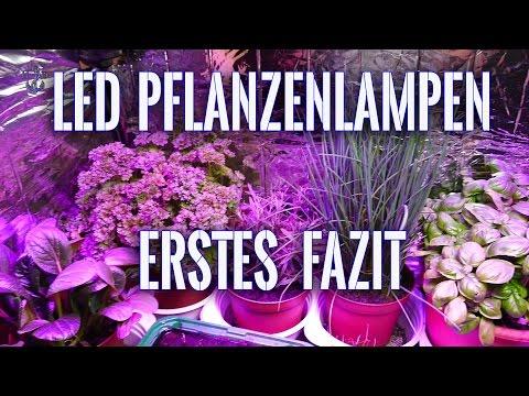 Led Pflanzenlampen (erstes Fazit)