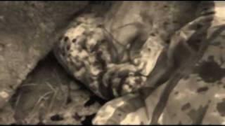 Video feat Masna Mord - Chcípneš