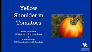 Yellow Shoulder in Tomatoes