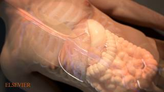 Trinity Animation Project | 3D - Medical Animations And  Anatomical Illustrations - Organ Level