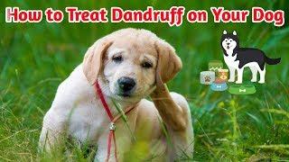 How to Treat Dandruff on Your Dog / Dog dandruff removel