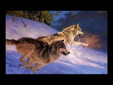 Как добытый волк может лишить оружия и права охоты от года до двух лет.