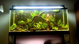 Fish Tank Question - How Often do you do a Water Change?