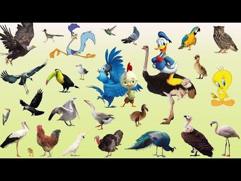 வனப்பறவைகளின் பெயர்கள் - Train With birds Name