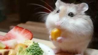 Cute Pics Of Hamsters