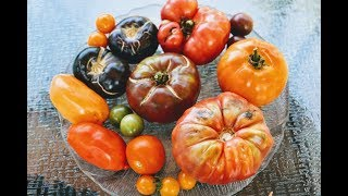 Heirloom Tomato Tasting Review: Which Was The Best?