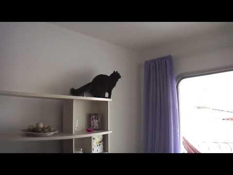 Điệp vụ bất khả thi version mèo