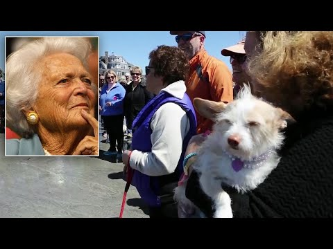 Dog Walkers and Their Pets Hold Beach Memorial for Barbara Bush
