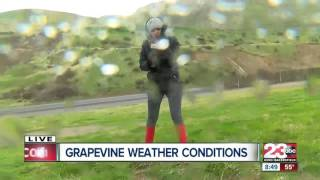 Strong winds and rain along the grapevine