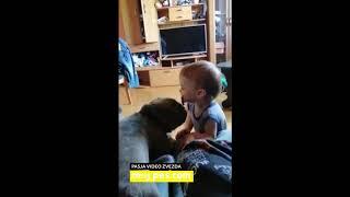 Kayle – Video natečaj 2020 – Revija Moj Pes #Kayle #MojPes