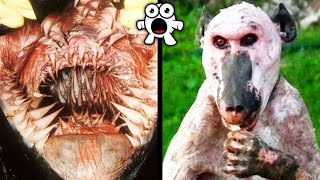 Video Terrifying Animals You Wouldn't Want to Encounter MP3, 3GP, MP4, WEBM, AVI, FLV Agustus 2019