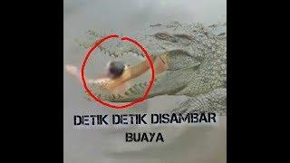 Detik-Detik Pawang disambar buaya disaksikan warga di Kutai Kartanegara Kaltim