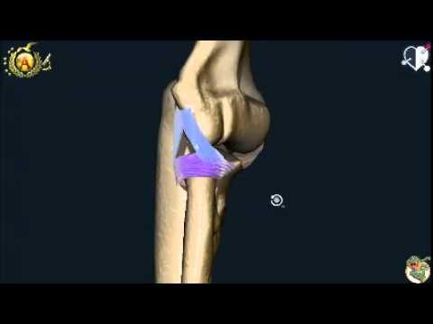 Per ginocchio ialuronico compresse di acido