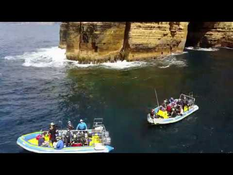 Go Dive Tasmania  - Explore above and below the surface