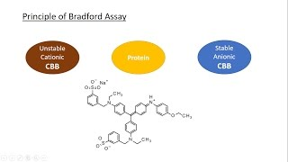 A full explanation about Bradford assay, Coomassie Brilliant Blue and the calibration curve