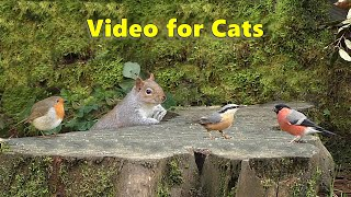 Videos for Cats : Birds Chirping in The Secret Forest -  9 HOURS of Cat TV