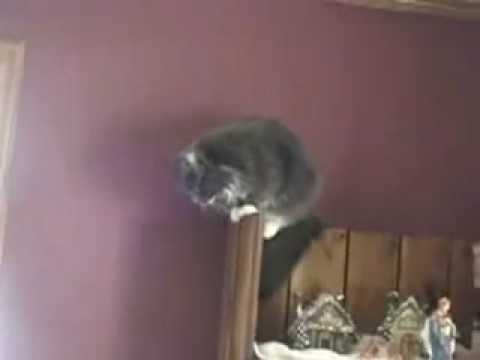 Some guy yells at some cats