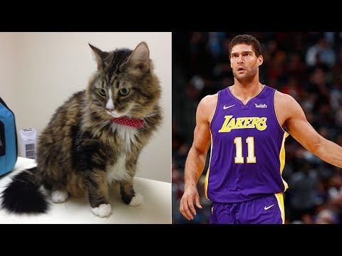 Lakers' Brook Lopez uses private car service to evacuate cat | ABC7