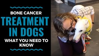Bone Cancer Treatment in Dogs: What You Need to Know Part 2 (Vlog 72)